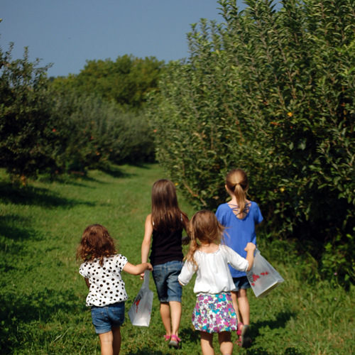 Four girls on a mission. An apple picking they must go!